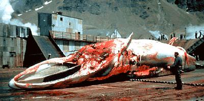 baleine-c18cf