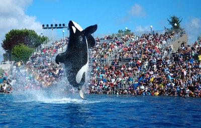 news-140815-2-1-2009-seaworld-shamu-400w