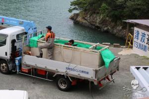 Des dresseurs retiennent un delphineau dans une petite caisse, refusant de le laisser sortir avant le départ des Gardiens de la Baie – Photo: Sea Shepherd